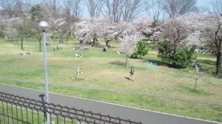 花見2 2015.3.31